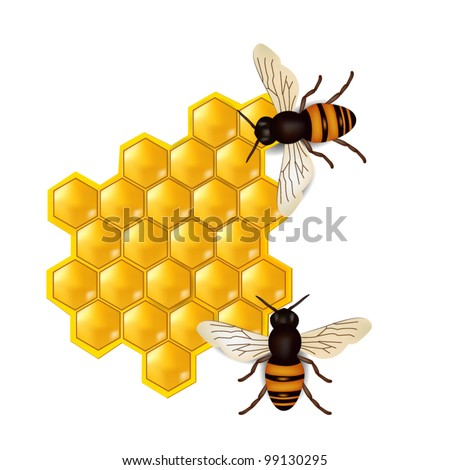 honeycombs with honey bees - stock vector
