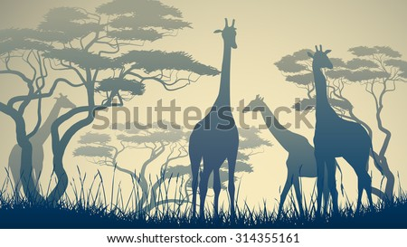 Horizontal vector illustration of wild giraffes in African savanna with trees. - stock vector