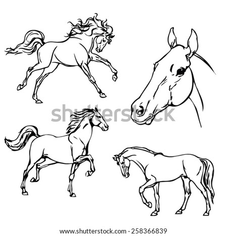 Horse. B & W vector drawing. - stock vector