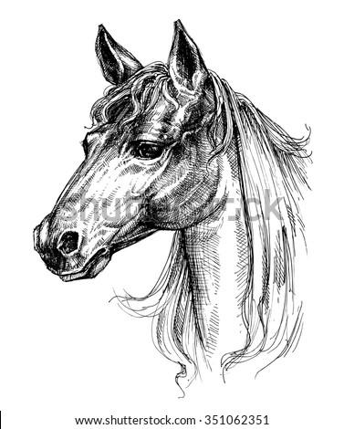 Horse head drawing - stock vector