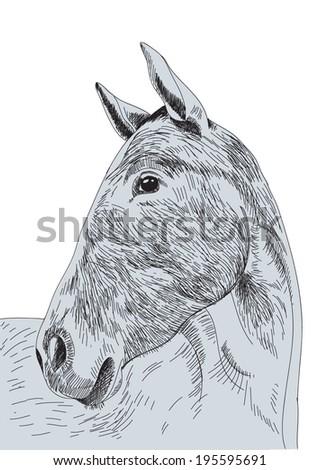 Horse head hand drawn. Vector Illustration - eps10. - stock vector