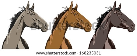 Horse vector portraits in three different colors. - stock vector