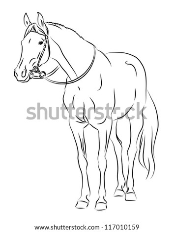 Horse with bridle sketch - stock vector