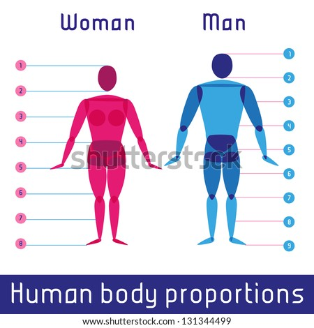 Human body measurements and proportions - stock vector