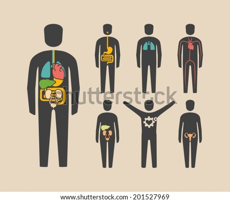 Human body organs - stock vector