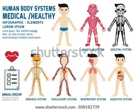 human body systems,