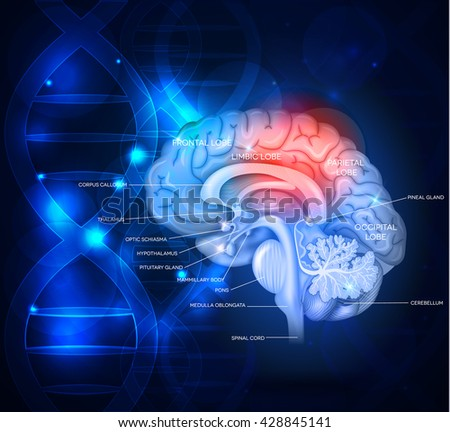 Human brain abstract scientific design with DNA chain, beautiful bright deep blue color