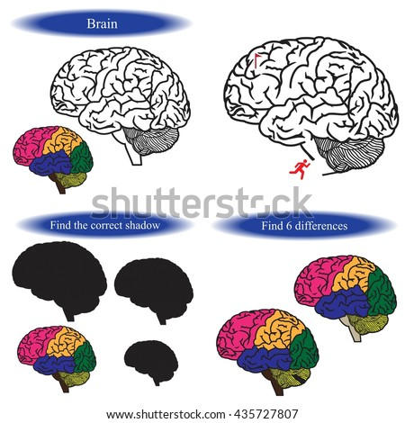 Human Brain Coloring Book Find Differences Stock Vector 435727807 ...