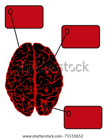 human brain from above with frame for information