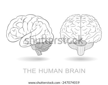 Human brain in two perspectives on a white background. Without a difficult and transparency effects. EPS8 only - stock vector