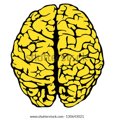 human brain model. eps10 vector illustration - stock vector