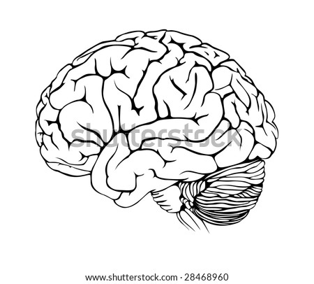 Human brain on white background - stock vector