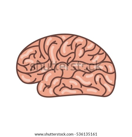 human brain organ icon over white background. colorful design. side view. vector illustration