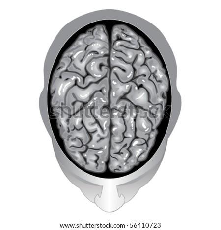 Human brain top view - stock vector