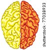 human color brain isolated - illustration - stock photo
