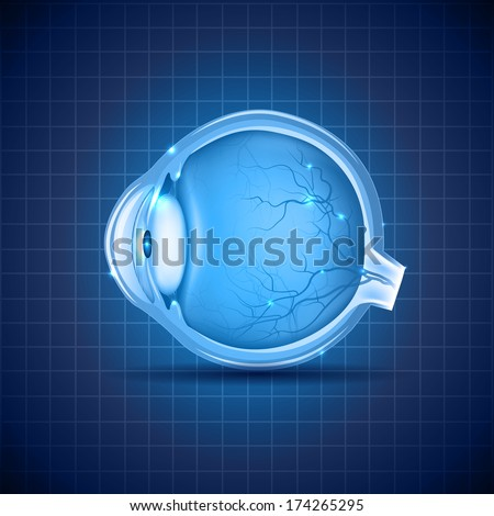 Human eye abstract design, detailed medical illustration. Beautiful deep blue color. - stock vector