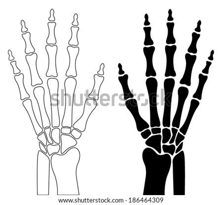 human hand bones - stock vector