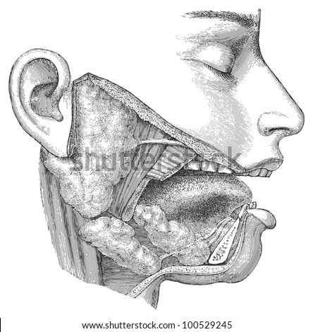 Human head anatomy - nose, mouth and throat / vintage illustration from Meyers Konversations-Lexikon 1897 - stock vector