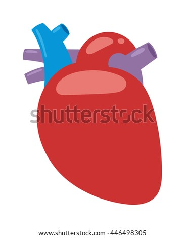 Human heart anatomy isolated on white vector illustration. Anatomy body human heart biology science aorta. Human heart cardiology, healthcare atrium system healthy physiology symbol. - stock vector