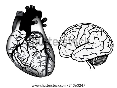 human heart and brain in black and white color - stock vector