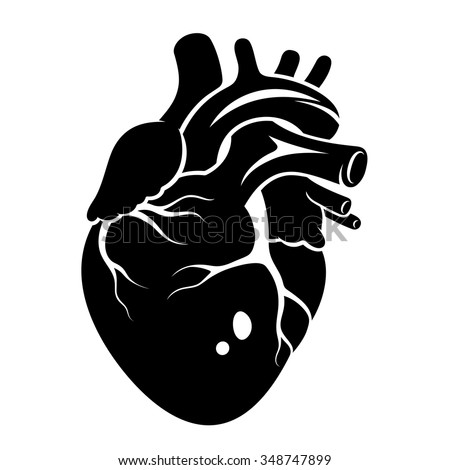 Human Heart icon isolated on a white background - stock vector