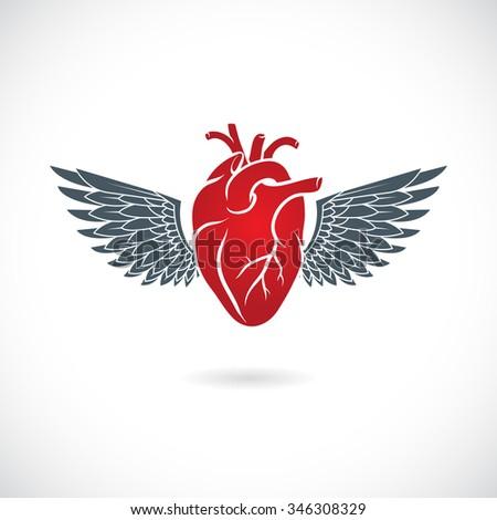 Human heart symbol. Vector illustration. - stock vector
