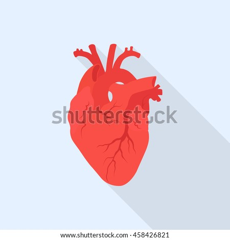 human heart vector icon internal organ stock vector 458426821 rh shutterstock com human heart vector png human heart vector sketch