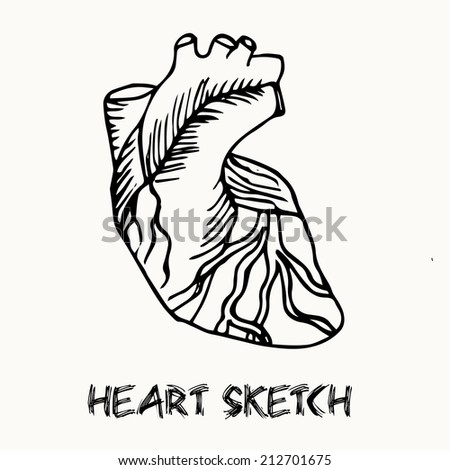 Human Heart Vector Black And White Human Heart Vector