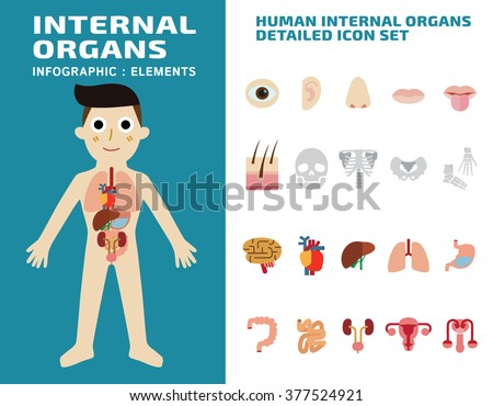 Human internal organs detailed icons setisolated on white background.wellness concept. - stock vector