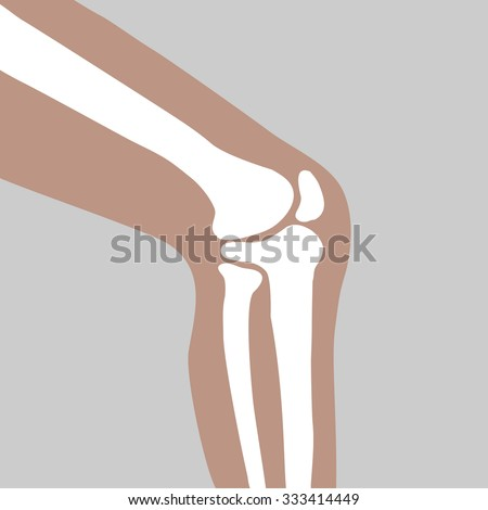 human knee joint side view - vector - stock vector