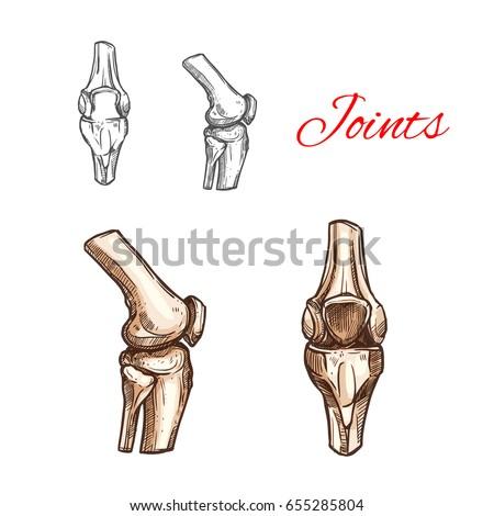 Human Knee Elbow Bones Joints Vector Stock Vector 655285804 ...