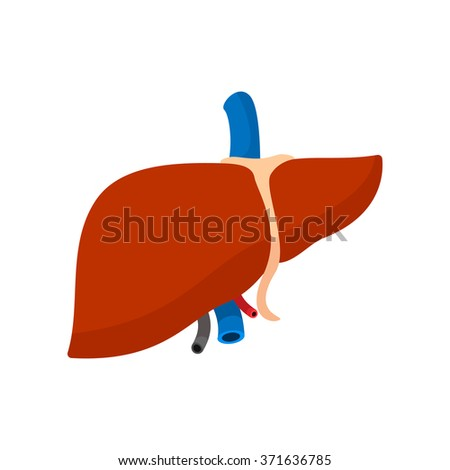Human liver cartoon icon isolated on white background - stock vector