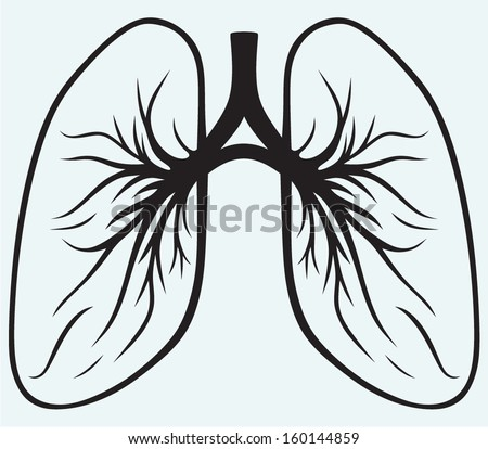 Human lungs isolated on blue background - stock vector