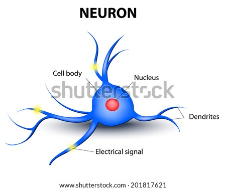 human nerve cell on a white background - stock vector