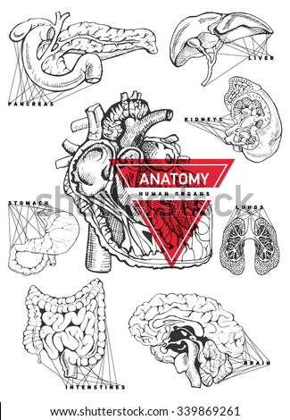 Human organ anatomy set. Hand drawing illustration for a textbook on medicine. Heart, kidney, lung, stomach, intestines, brain, liver, pancreas.  - stock vector
