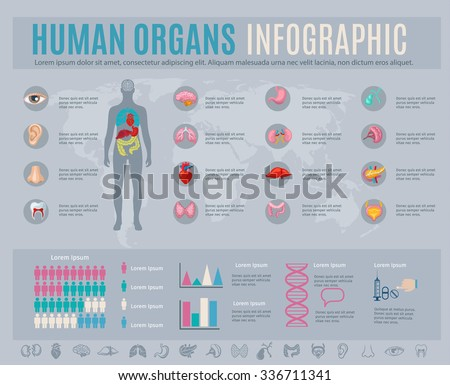 Human organs infographic set with internal body parts symbols and charts vector illustration - stock vector