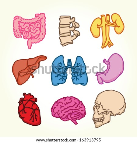 Human organs isolated vector objects - stock vector