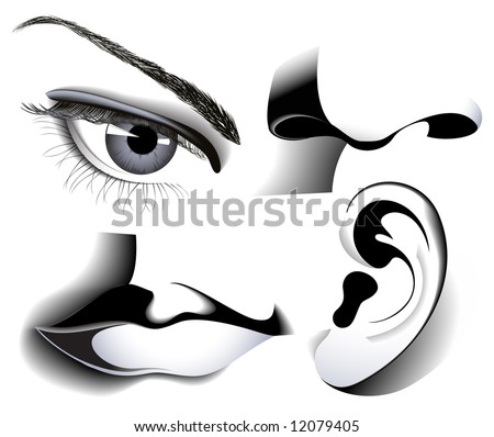 Human senses, vector illustration, EPS file  included - stock vector
