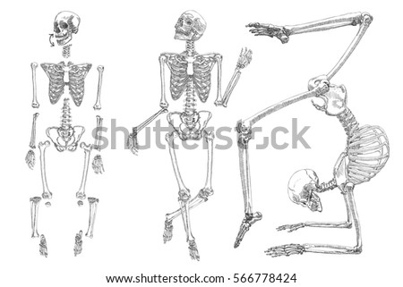 Human skeleton hand drawing set do stock vector 566778424 shutterstock human skeleton hand drawing set do it yourself with moving arms legs ccuart Choice Image