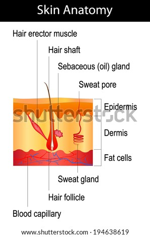 Human Hair Diagram Another Blog About Wiring Diagram