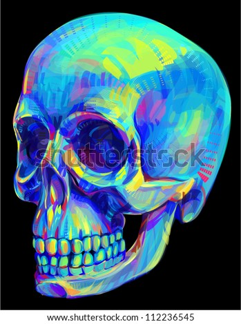 Human skull anatomy - stock vector