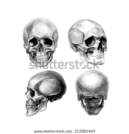 Human skull back bump