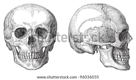 Human skull / vintage illustration from Meyers Konversations-Lexikon 1897 - stock vector
