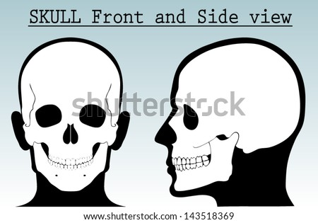 human skull with silhouette head /front and side view/ vector illustration - stock vector