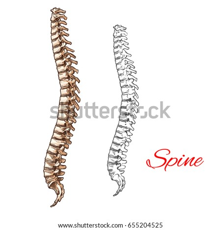 medical infographic human skeletal system anatomy stock vector, Skeleton