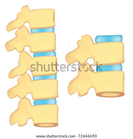 human spine. mesh - stock vector