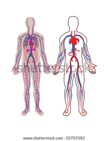 Human vein in vector - stock vector