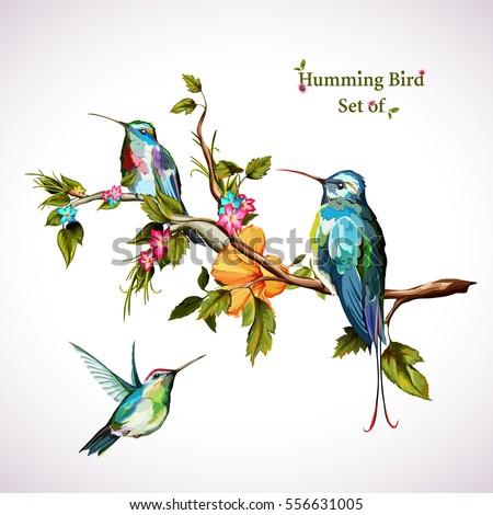 cute birds vector royalty free stock photo image 12921555