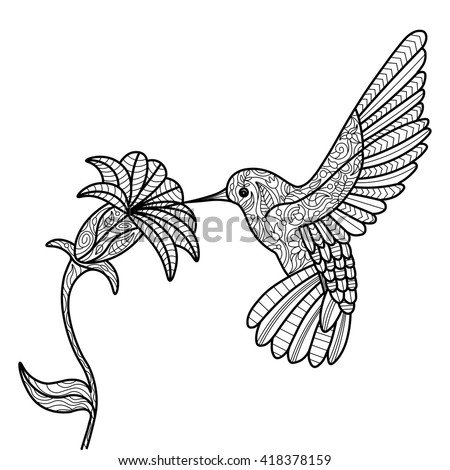 hummingbird and flower coloring book for adults vector