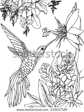 hummingbird flying under the flowers and drinking nectar zentangle doodle and line art